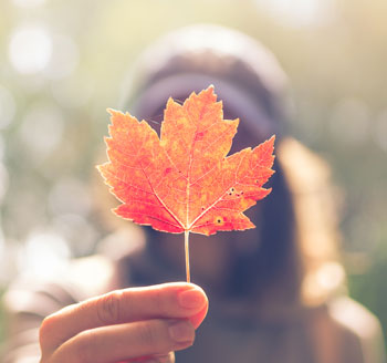 research_maple_leaf_2019
